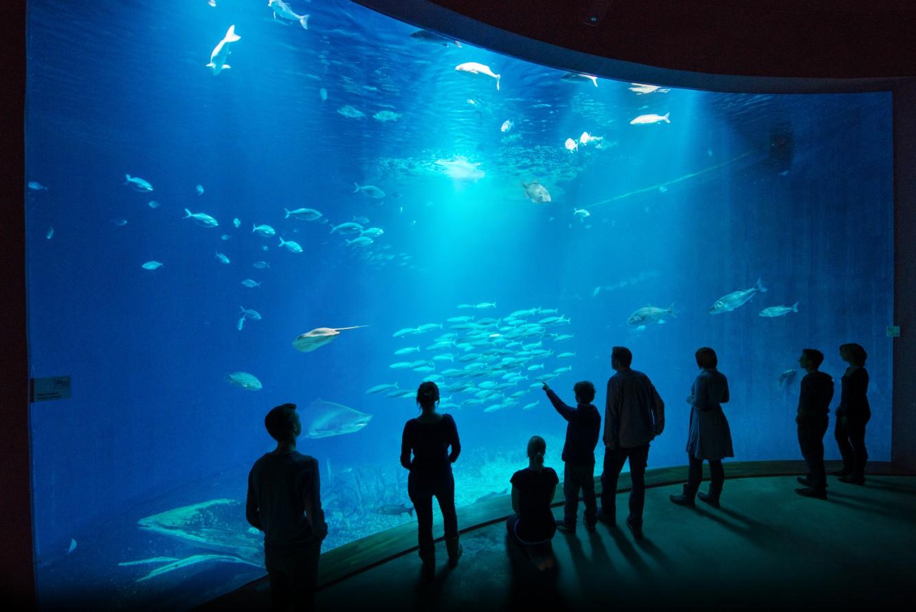 """Durch eine 50 Quadratmeter große Panoramascheibe eröffnet sich der Blick auf den """"Offenen Atlantik"""" im größten Aquarium des OZEANEUMs. (Foto: Johannes-Maria Schlorke / OZEANEUM Stralsund)"""